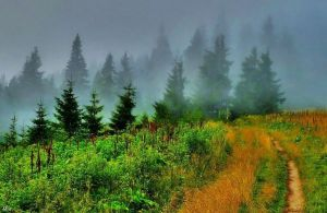 Forest in the fog by miirex