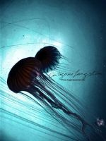 Jelly Fish by 37mm-Angel