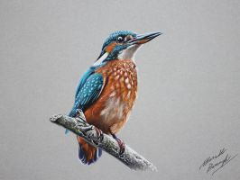 Kingfisher drawing by marcellobarenghi