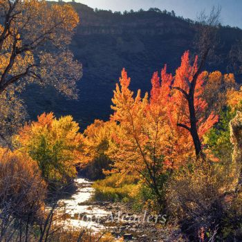 Colors of Fall by dissimilar0ne