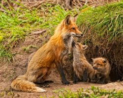 Mother and Kits ll by Les-Piccolo