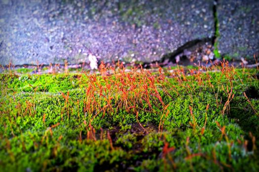 20140209 150428 Hdr by P5YD3X