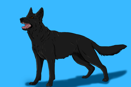 Shepherd Colored by misrable