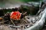Toadstool by MisInvisible