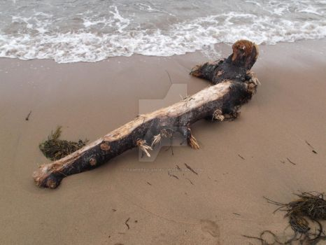 Driftwood by tampered-angel