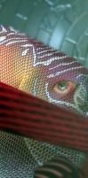 Red Discus -fish- by Butch007