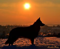 silhouette of a dog by Alouette-Photos