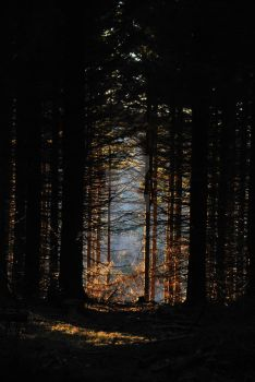Forest by Sephienne