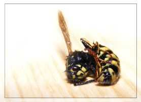 Wasp by suicidesheep