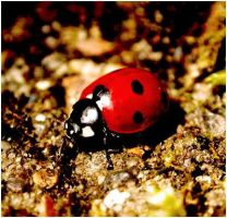 Ladybird yay XD by Unfaithed