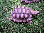 Turtle by pattsy
