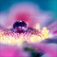 I am purple2 by dini25