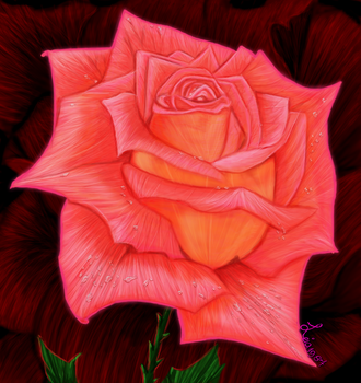 Brightly-red-rose by Leia1987