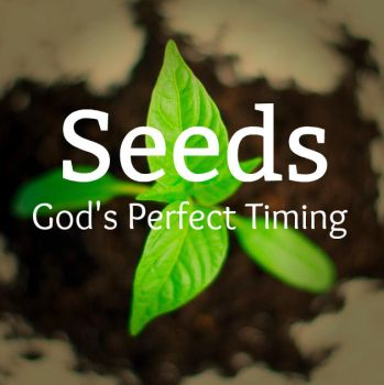 Seeds: God's Perfect Timing by 1234RoseSmith