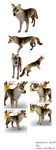 Realistic Wolf Preset (Feral Heart) by MeaWolfenX