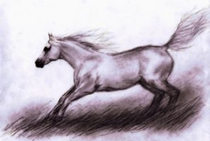 untitled - horse by Embers