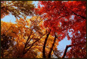 Colors of autumn by JoInnovate